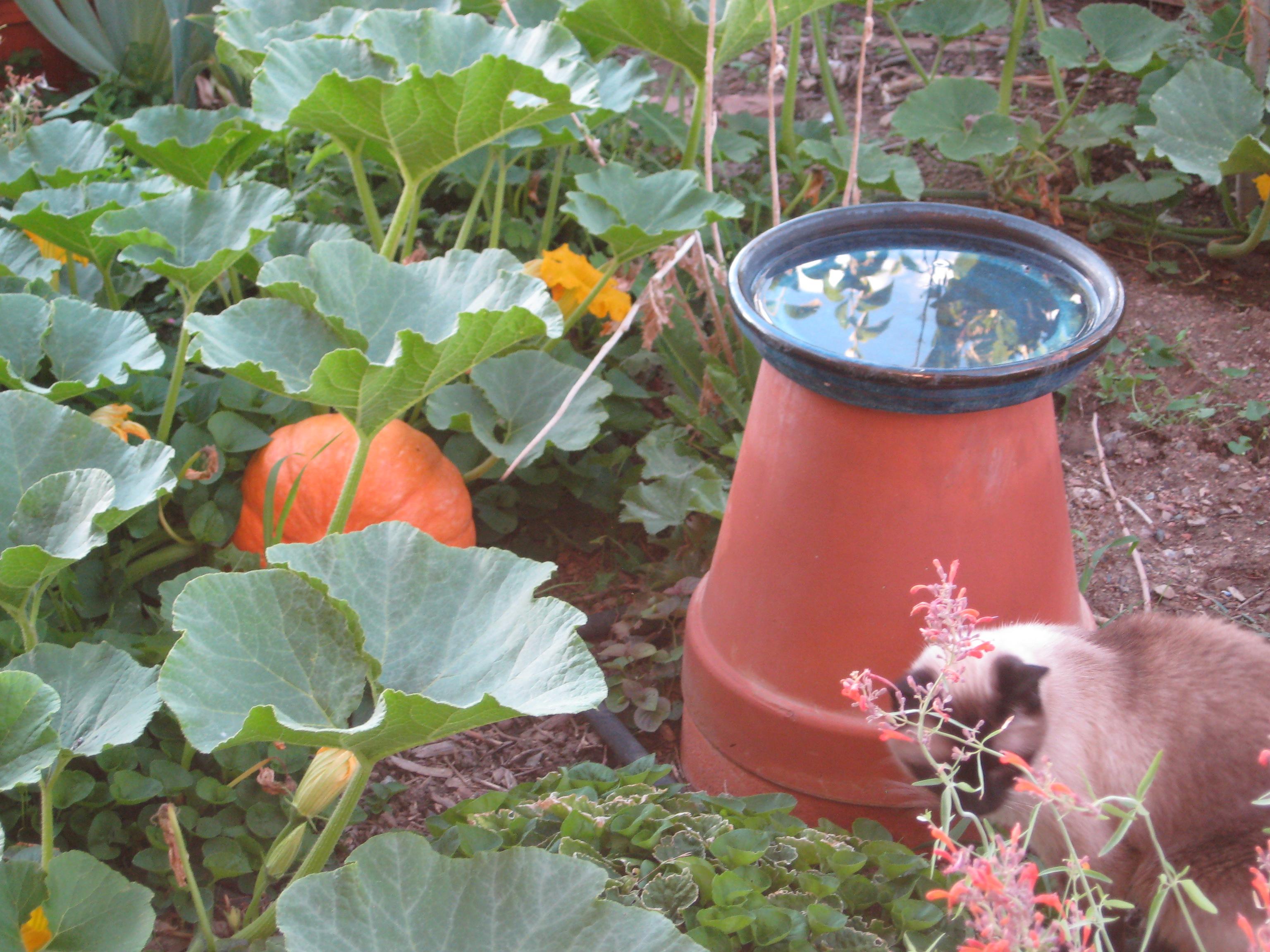 Heritage Heirloom Food Plant Info | Desert Canyon Farm Green ...