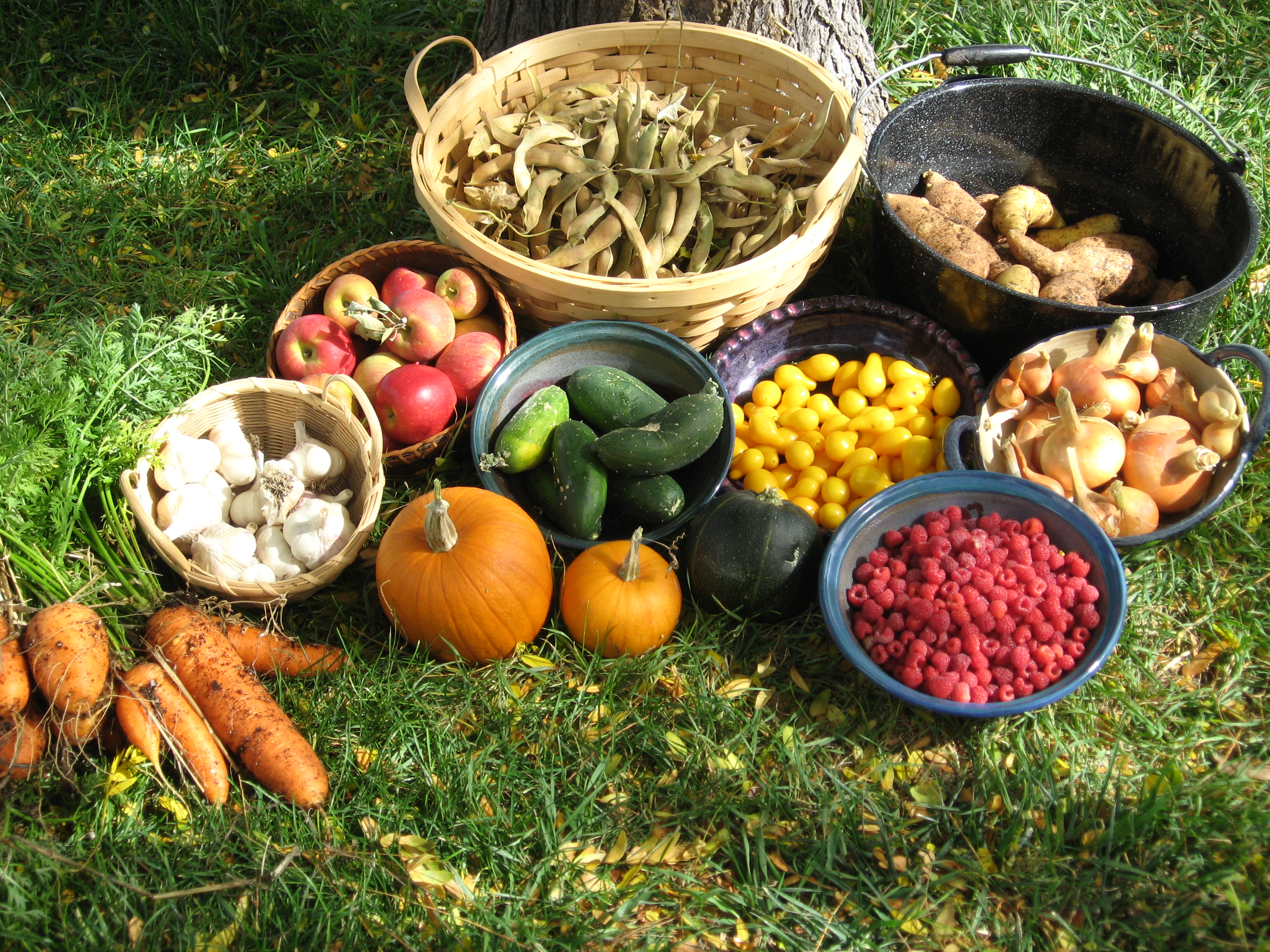 Agriculture and Other Food Sources - Manitou Cliff Dwellings