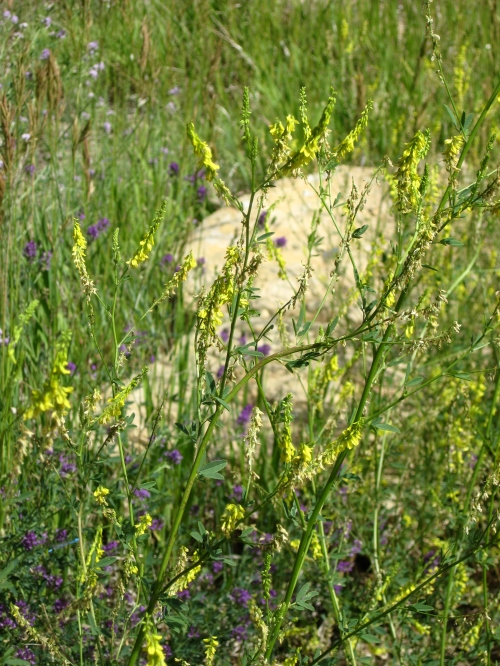 How To Use Herbs Desert Canyon Farm Green Thoughts Blog