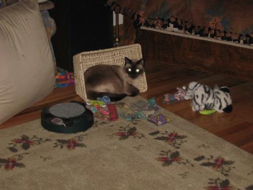 Pouncita with toys