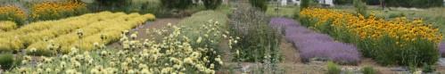 cropped-hartung-herb-farm-123.jpg