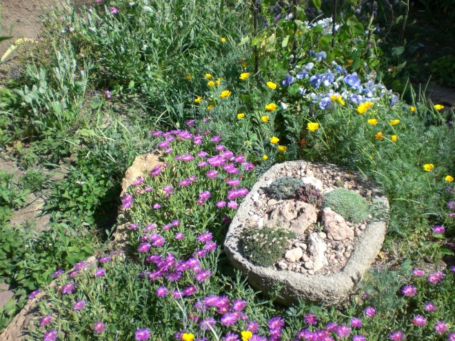 D. cooperi and trough garden