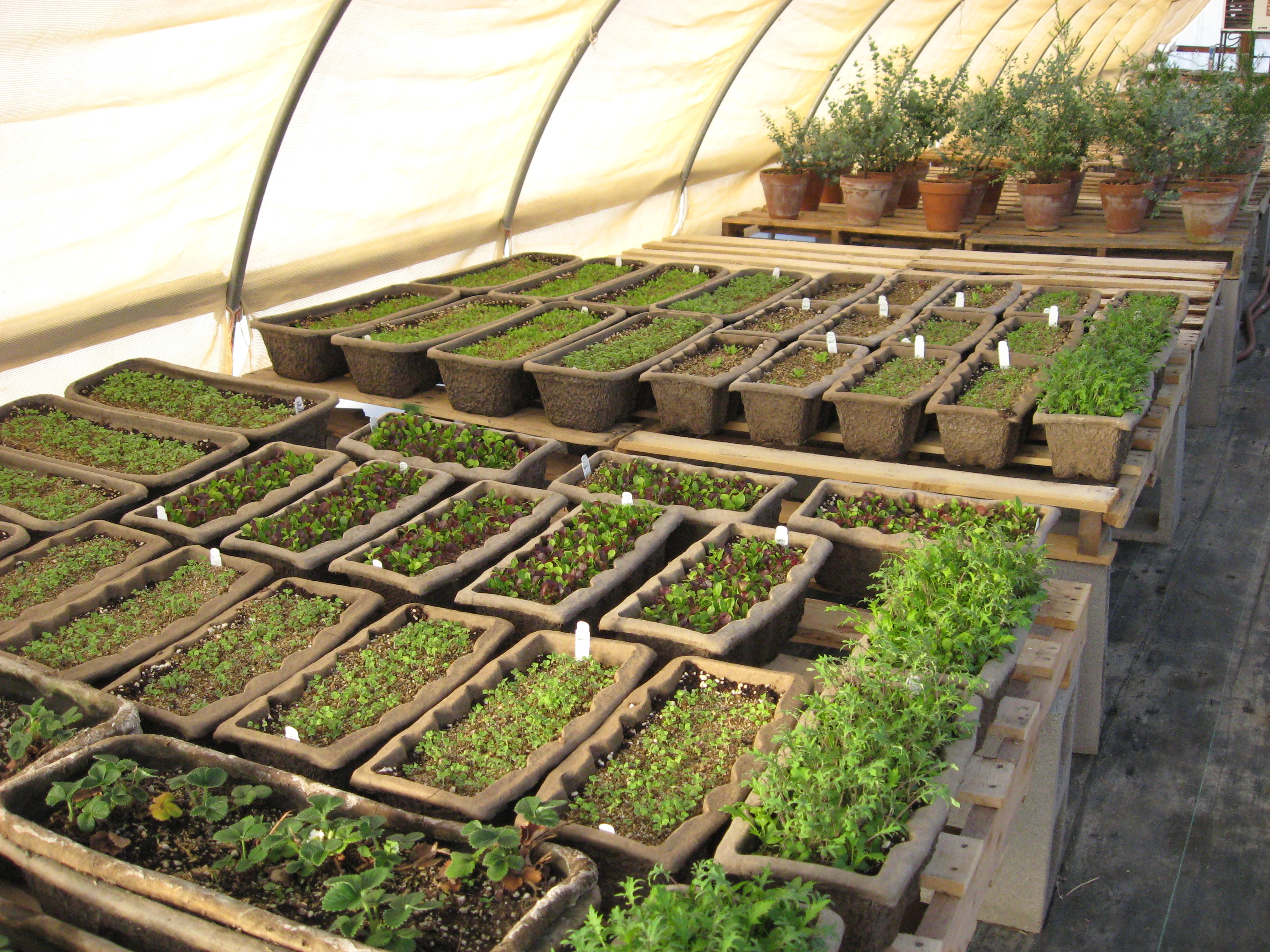Uncategorized | Desert Canyon Farm Green Thoughts Blog | Page 30