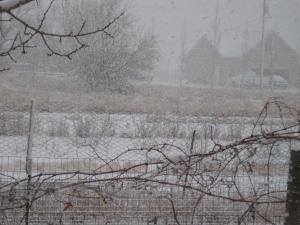 snowstorm 2-24-13 4