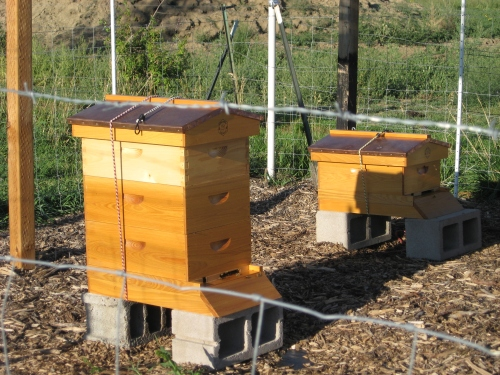 beehives 9-2013