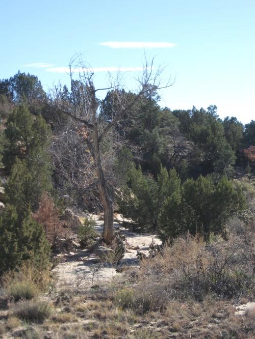 brookside hiking trail 11-2013 3