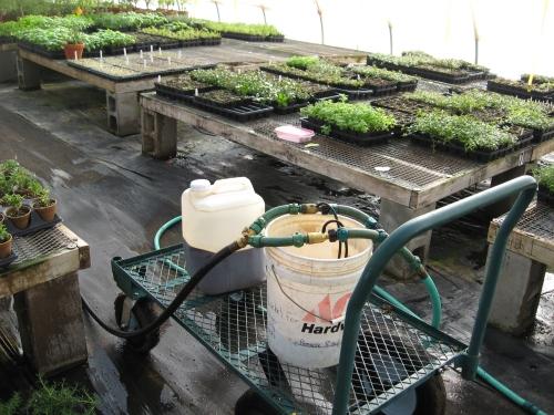fertilizing basil house
