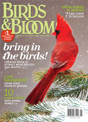 birds and bloom mag cover