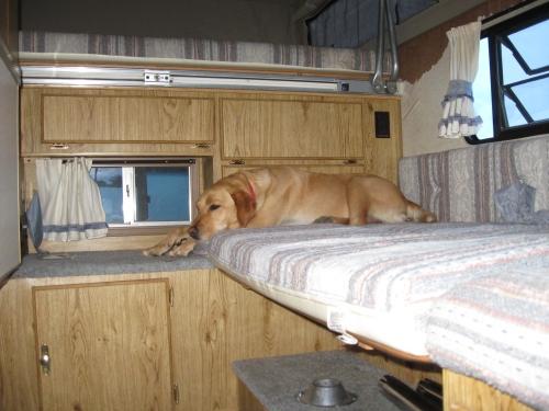 camper 021