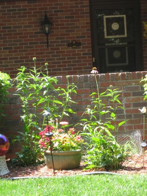 Ted's pollinator garden