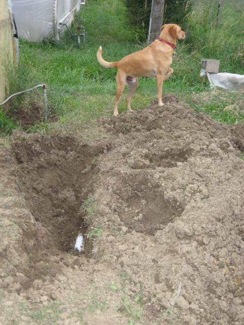 garden mulch 004