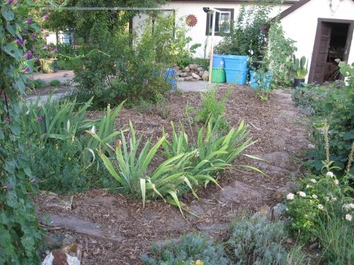 garden mulch 008