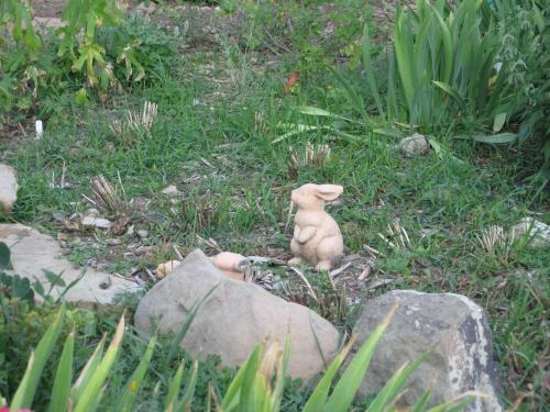 garden mulch 009