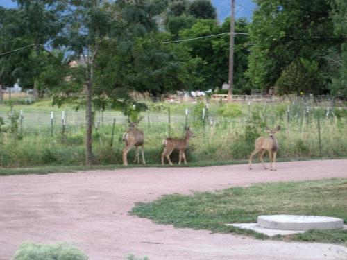 Alamosa farmers visit 006