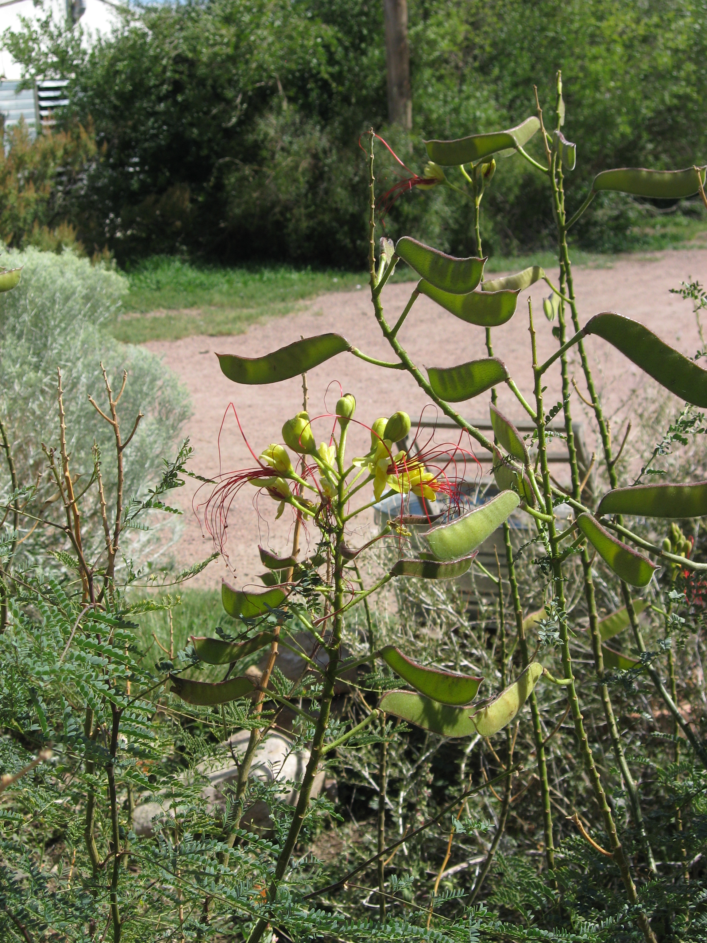 September 5 2016 The Joys Disappointments Of Seed Growing